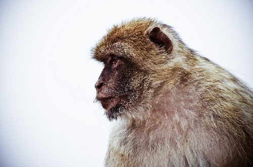 Gibraltar - dom wielu małp...